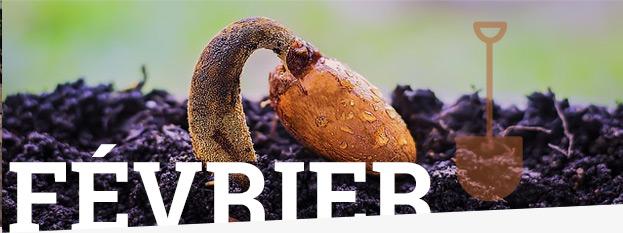 Jardinage : ce qu'il faut faire en Février