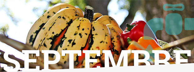 Jardinage : ce qu'il faut faire en Septembre