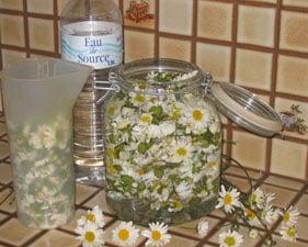 Cuisine des fleurs comestibles : marguerite, lilas, bourrache