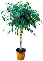 Yucca plante int rieur tout - Plante appartement facile ...