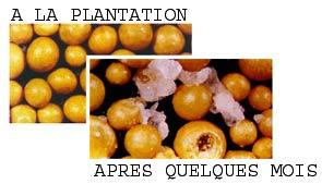 Les engrais à libération lente type Osmocote (R)