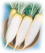 radis asiatique - (c) Graines Baumaux