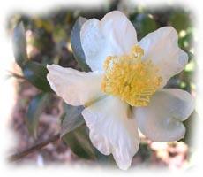 Jardinage en décembre: rosiers, arbres, arbustes et pelouse