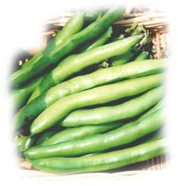 gousses de fèves