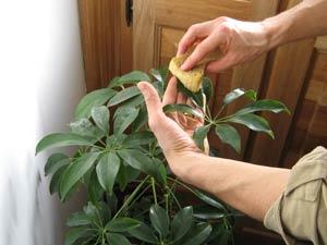 Jardinage en mai: plantes vertes et travaux divers