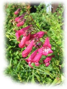 Fleurs et plantes fleuries